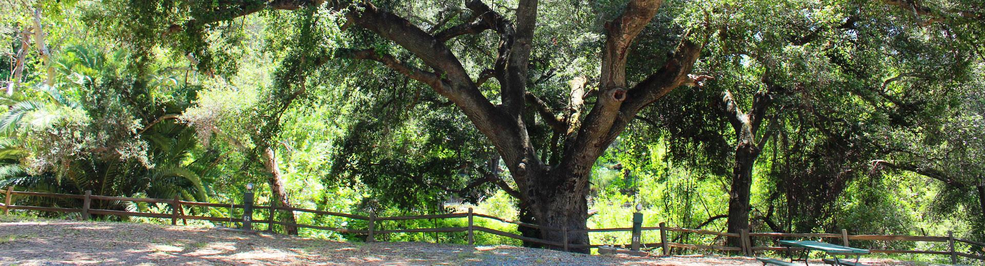 ramona-oaks-rv-resort